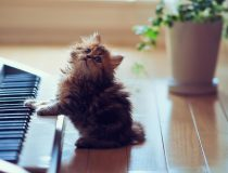 Kitten_and_the_electronic_piano