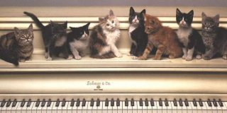 Piano-Cats-domestic-animals-2586311-1024-768